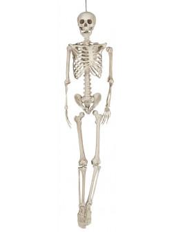 Esqueleto Humano Tamaño Real 160cms