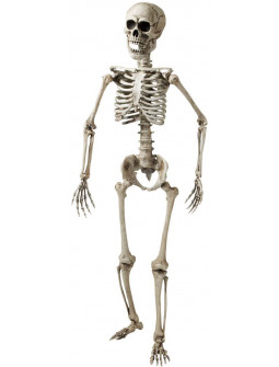 Esqueleto Humano Realista 160cm