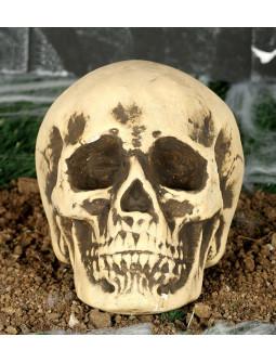 Calavera Realista para Decoración de Halloween