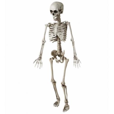 Esqueleto de 120 cm