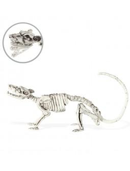 Esqueleto de Rata Articulable